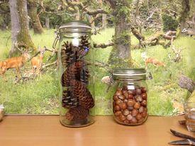 Sylteglas med kogler og nødder