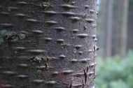 Billede af bark