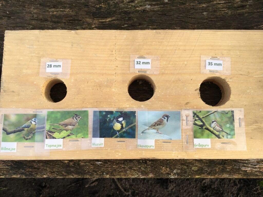 huller til fuglekasser