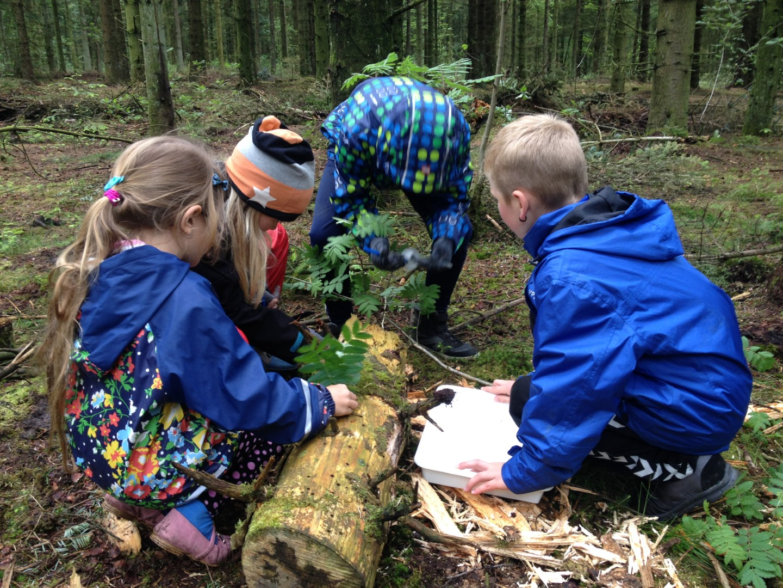 Børn søges efter kriblekrable dyr i skoven