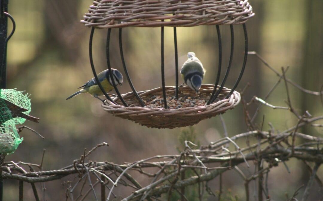 Fugle og sundhed