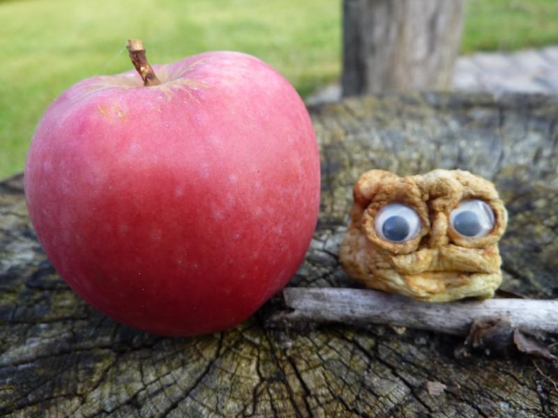 Frisk æble og en rigtig tørret æbletrold