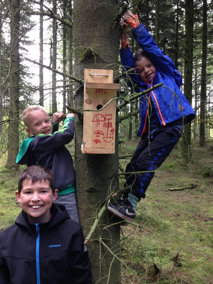 3 drenge viser deres fuglehus i et træ