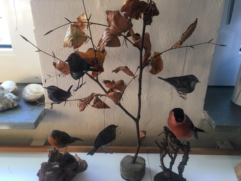 Fugletræ