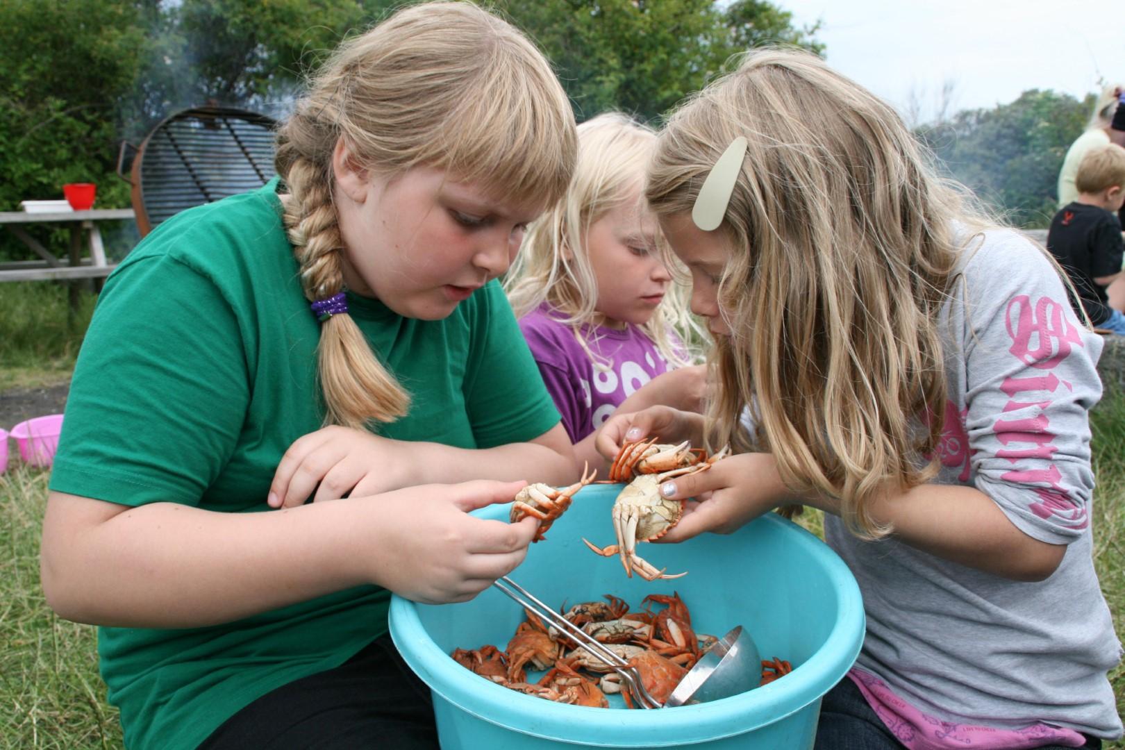 Krabber undersøges på Livø