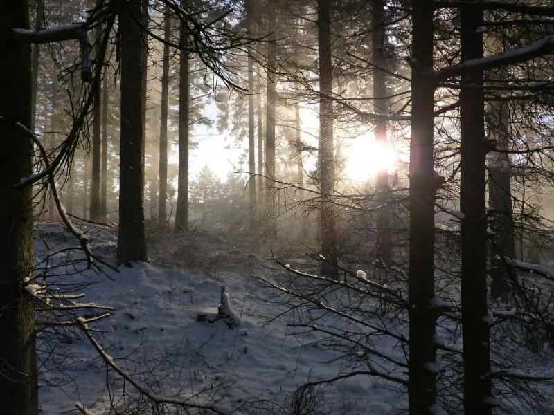 Snelandskab inde i skoven