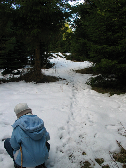 Pige kikker på dyrespor i sneen