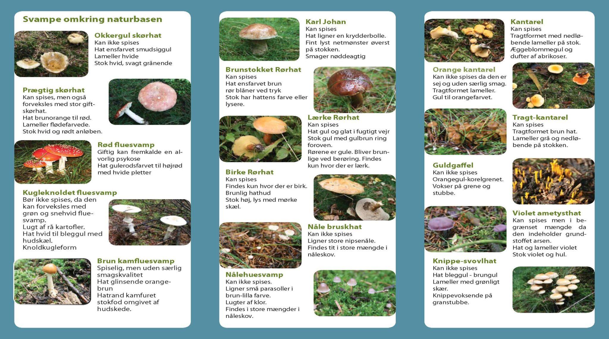 Oversigt over svampe