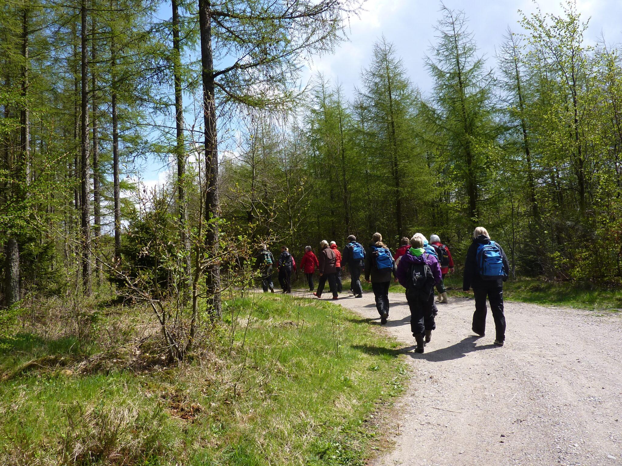 Folk på tur i skoven