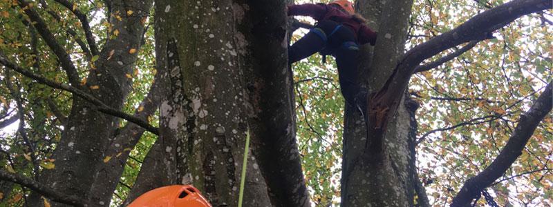 et barn som klatre højt op i et træ