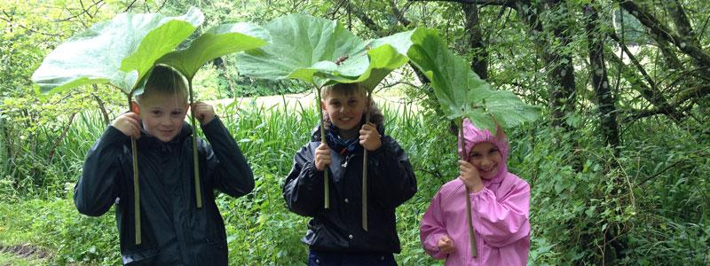 Store blade som bruges som paraply