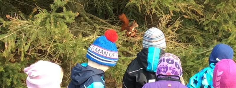 Børn kikker på et egern