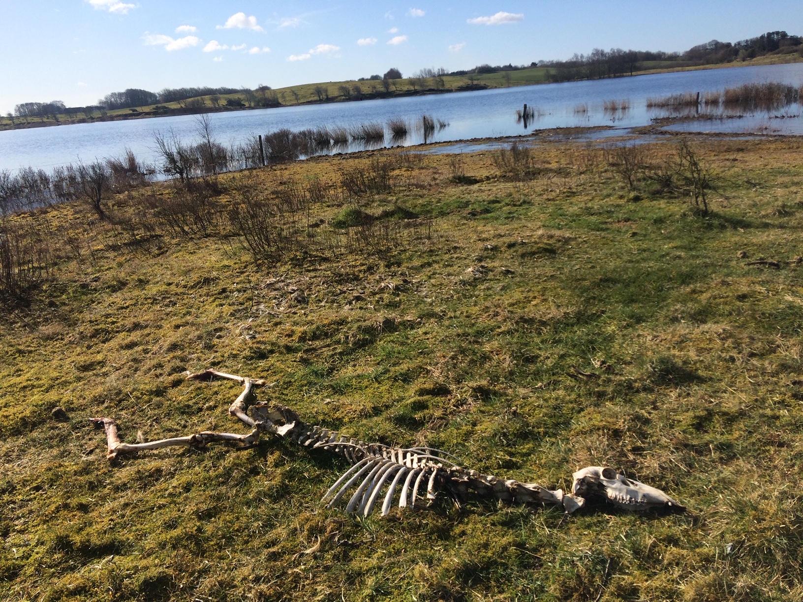 Skelet ved Navnsø