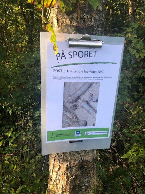 """""""På Sporet"""" af dyr i skoven"""