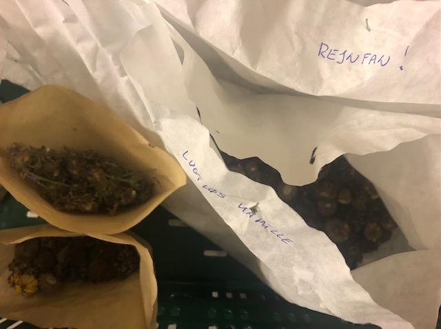 vilde frø i kaffefilter